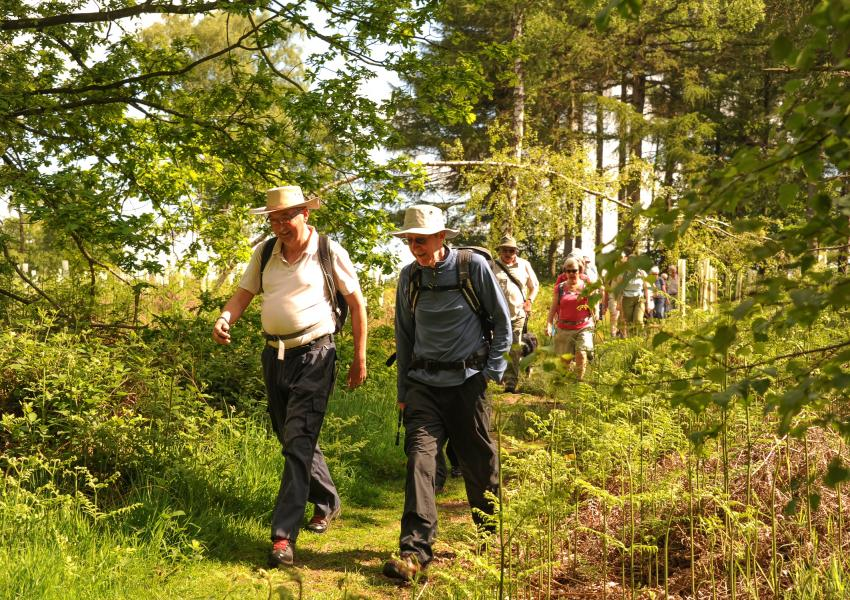Walking activities in the National Forest
