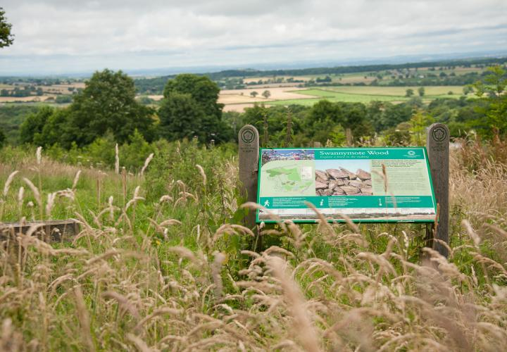Image of National Forest information board in field of long grass