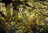 Swithland Wood © Bradgate Park Trust