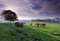 Broombriggs Farm © Nick Fell