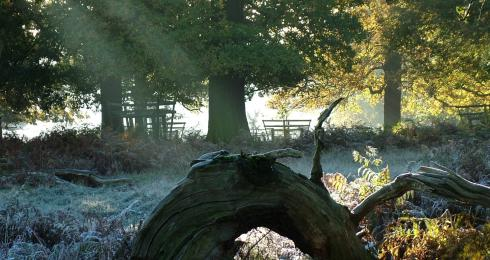 Wildlife & Woodlands - The Calke walk